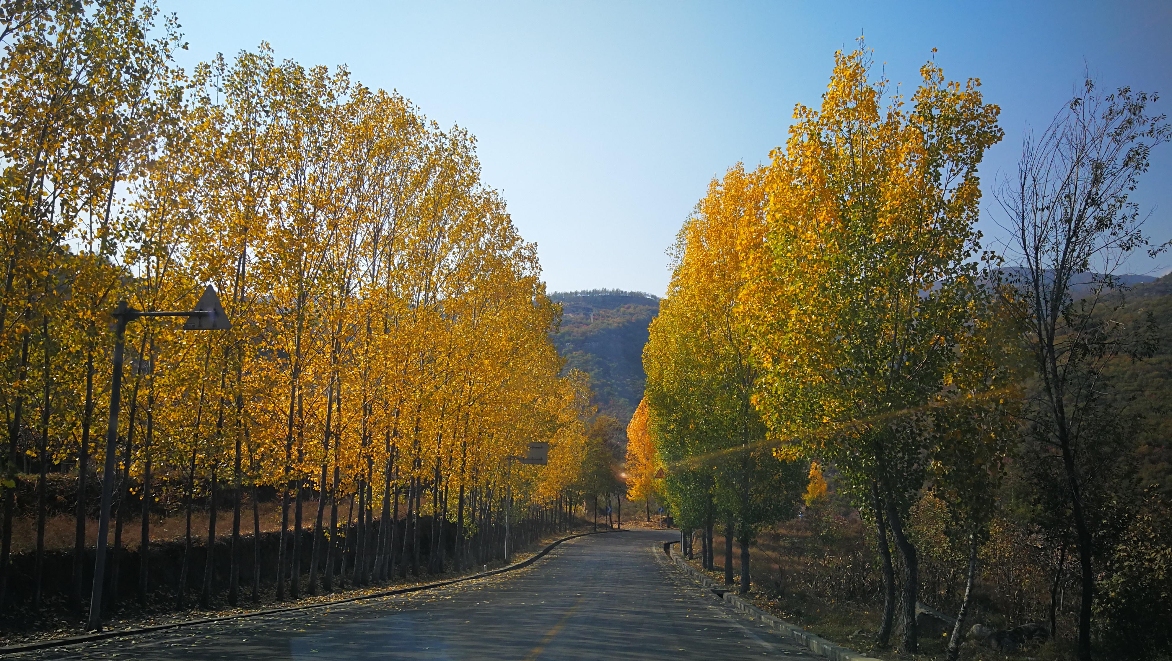 临汾市内的国家森林乡村 没事儿可以去散心放飞